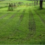 What can be done for the lawn ruts